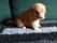 Rocco (10)