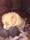 Hane beige Male beige (9)