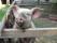 Klasatorpet gris