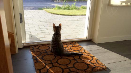 Vår katt Milo får vara modell - myggnätsdörren är bra även för dig som vill hålla kissen inne eller kanske ute
