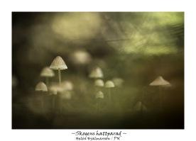 Skogens hattparad