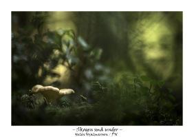 Skogens små under