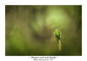 Skogens små små fotspår