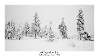 Vinterskrud
