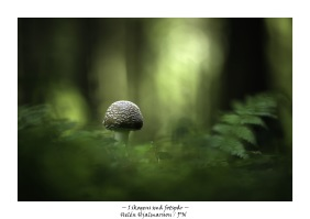 I skogen små fotspår