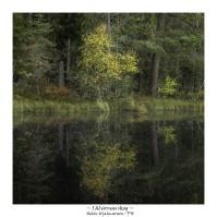 I älvornas skog