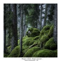 Skogen vaskar, skogen lyssnar