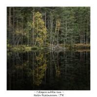 I skogens mörka rum