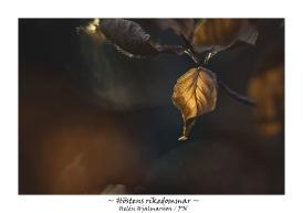 Höstens rikedommar