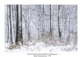 Tyst och stilla faller de första snöflingorna