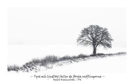 Tyst och ljudlöst fallaer de första snöflingorna