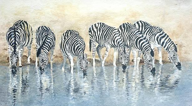 Akvarellmålning av Anneli Wester, Zebror