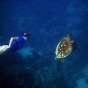 Jag såg en sköldpadda från båten, drog av mig jeansen, greppade cyklopen i farten och dök i. Efter kom en fotograf.
