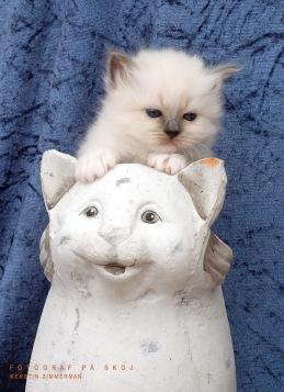 Som kattunge