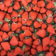 Sommar jordgubbar trikåtyg