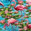Näckros och flamingo