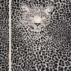 Leo grå- bomullstrikå