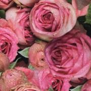 Ljuva rosor stor vävt bomullstyg
