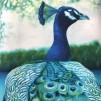 Herr Påfågel rapport- bomullstyg