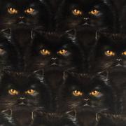 Svart katt- bomullsväv