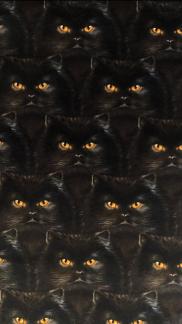Svart katt- bomullsväv -