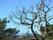 Dött träd stor Utsiktspl