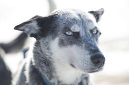 3) Best dog care 2017 LDL