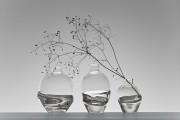 Vase Grow, 300 sek - 500 sek Photo by Ulrika Kestere