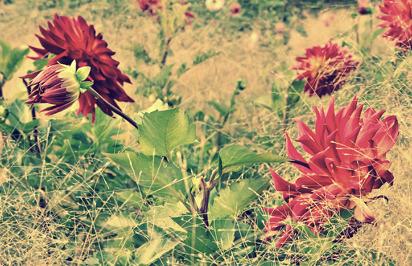 13 - October garden