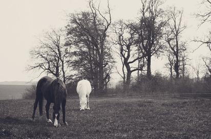 23 - Black & White
