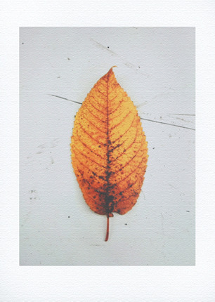 October leaf - giclée print 22,5 x 31 cm
