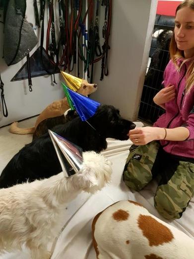 ANNA har tidigare arbetat på andra hunddagis men är anställd hos oss sedan okt-16. Anna har Labradoren Cola.