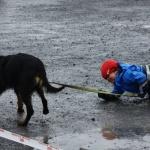 hund med barn