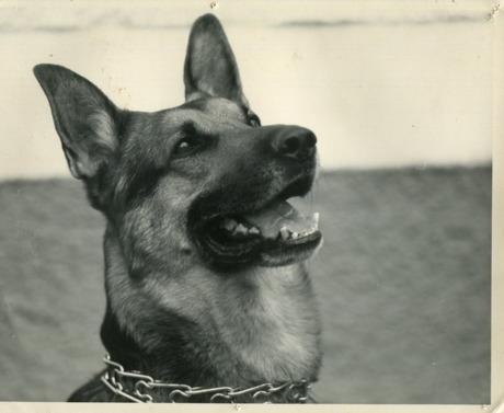 Zappa var en hund som farit väldigt illa. Han var 5 år när jag köpte han av en narkoman för 100 spänn! Han skulle avlivas, men jag fick stoppat det.Det var en helt underbar hund att jobba med, han hade ju aldrigt fått vara HUND! Han bet ngra av mina polare men de va inte Zappas fel. Dom kom aldrig mer o hälsa på! Han hade ett väldigt högt försvar mot alla han inte kände, o d va inte många.