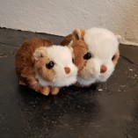 Bukowski Piggy o BabyPiggy
