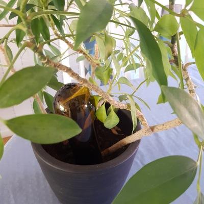 Självbevattnare - Återbrukshyttan