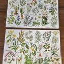 Bordsunderlägg Kryddväxter