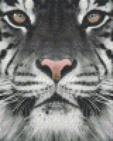 Vit tiger - Vit tiger