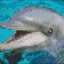 Delfin - Delfin 1 rbp