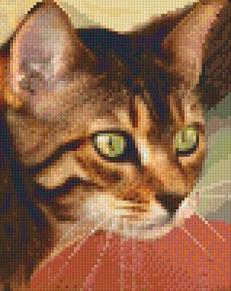 Katt - Katt