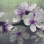 Blomster - Blomster - 2 rbp