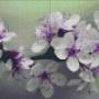 Blomster - Blomster - 4 rbp
