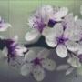 Blomster - Blomster - 8 rbp