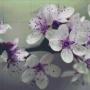 Blomster - Blomster - 20 rbp
