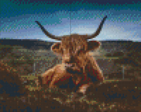 Highland Cattle - Highland Cattle - 4 rbp