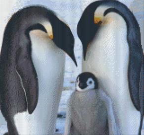 Pingviner - Pingviner 12 rbp