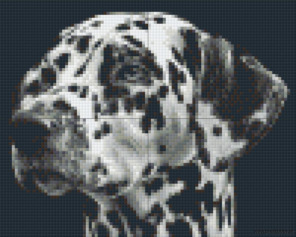 Dalmatiner 4 rbp