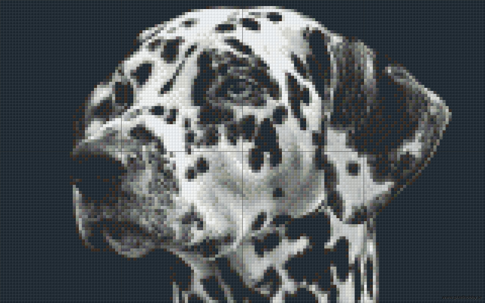 Dalmatiner 8 rbp