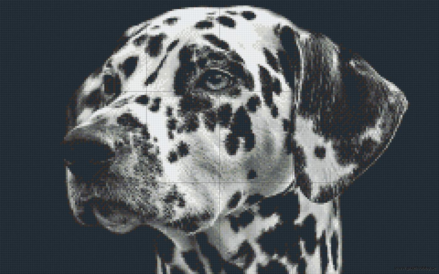Dalmatiner 18 rbp