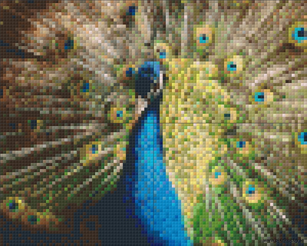Påfågel3 4 rbp